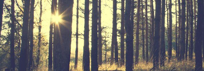 forest-sun-0715