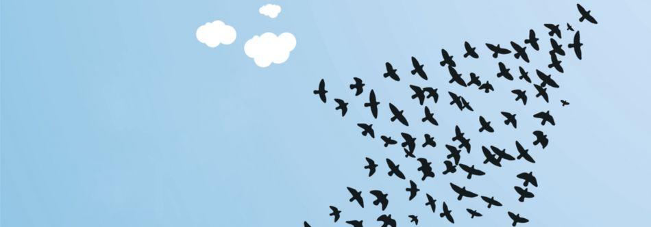 Bird arrow
