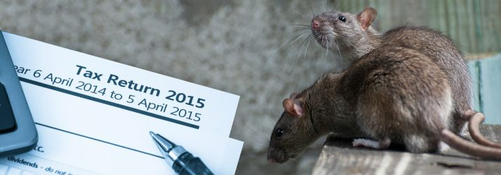 Rats and Tax Return