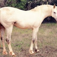 Photo of a unicorn