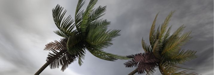 Trees in storm