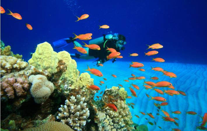 Coral reef diver